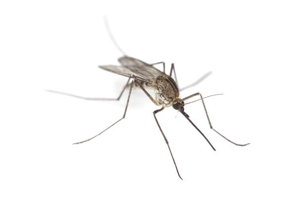 Biossensor detecta dengue em 20 minutos
