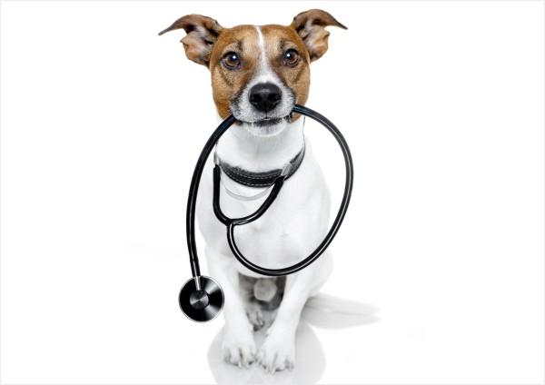 Olfato canino fareja câncer de próstata com 98 porcento de precisão
