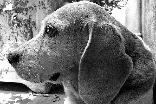 Visita de animais ajuda na recuperação de pacientes internados
