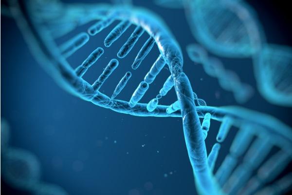 Pesquisa faz célula tumoral regredir para tecido normal