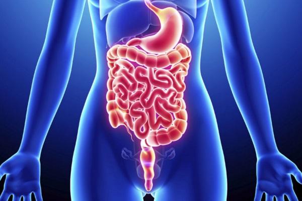 Estudo indica que flora intestinal causa resistência à insulina