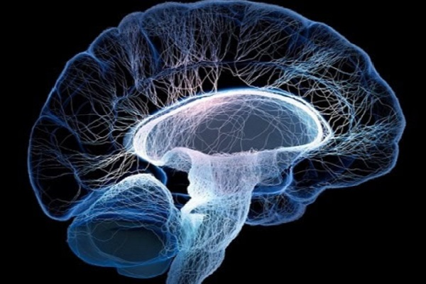 Obesidade tem relação com envelhecimento acelerado do cérebro