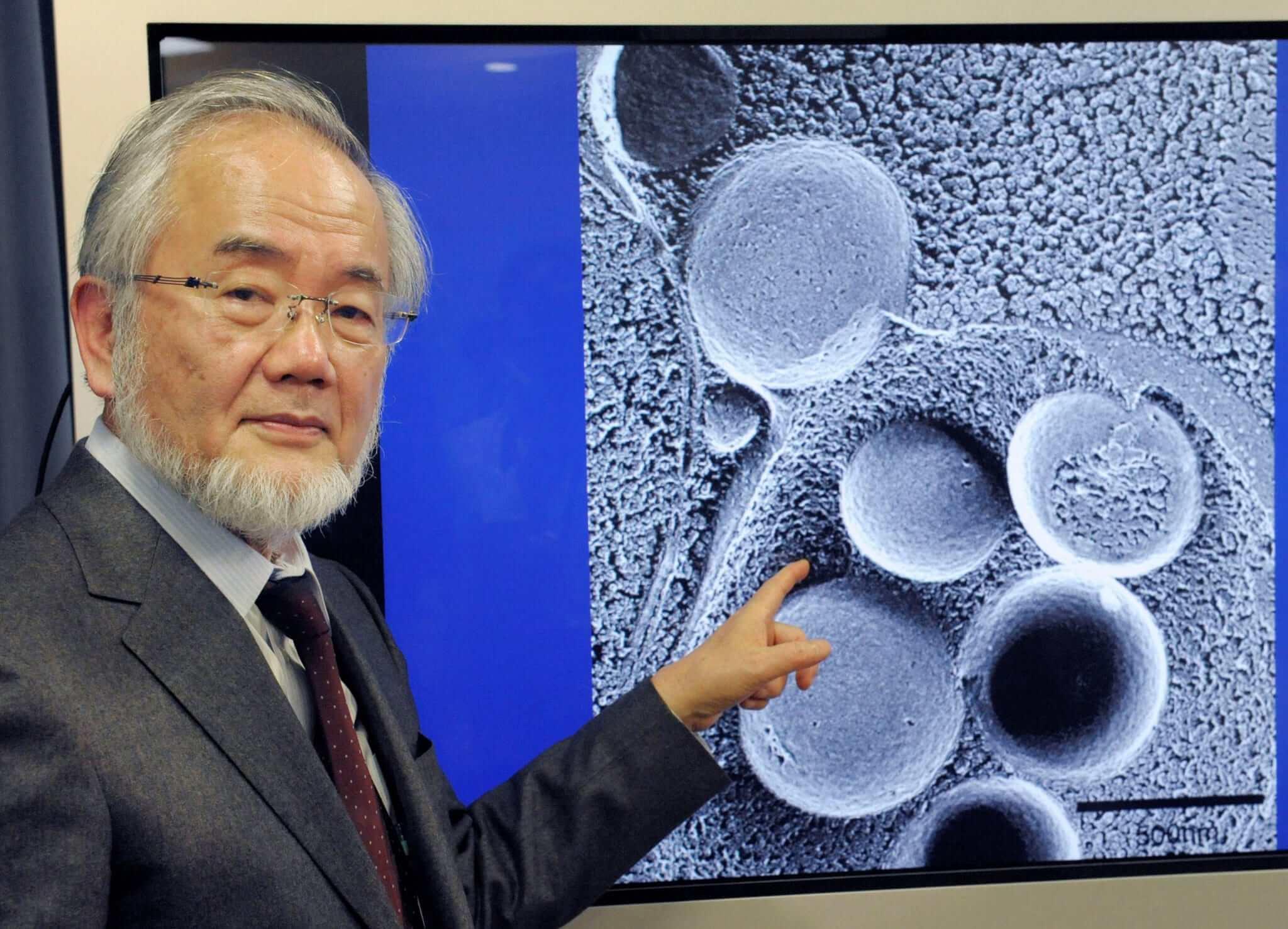 Japonês que estuda a autofagia celular recebe o Nobel da Medicina