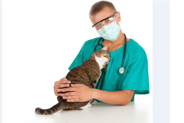 cuidados-com-animais-ajudam-a-explicar-os-custos-com-a-saude-humana