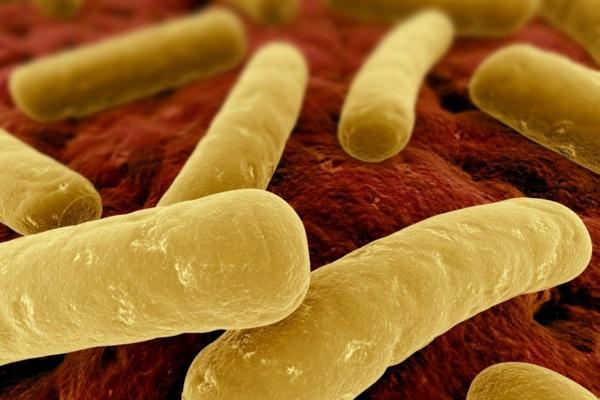 A difícil luta contra as bactérias resistentes