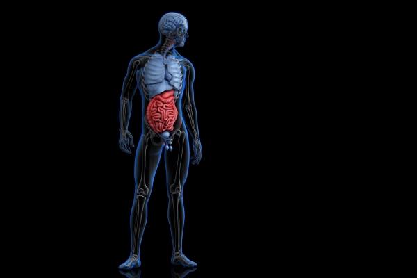 Microbiota intestinal pode oferecer os caminhos para escolher a imunoterapia mais adequada contra o câncer