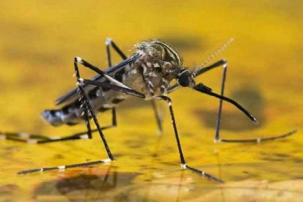 Ministério da Saúde confirma 331 mortes por febre amarela no Brasil