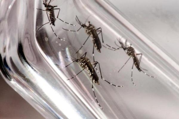 Confirmado caso de chikungunya contraído no Rio Grande do Sul