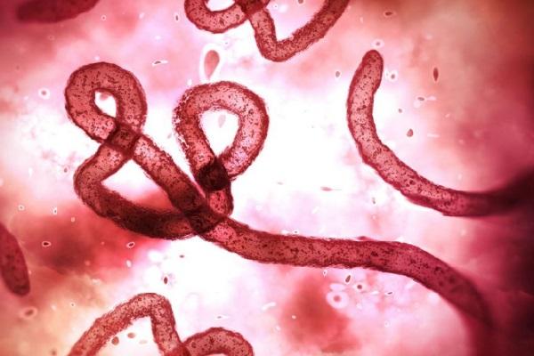 Ebola novos casos no Congo deixam a OMS em alerta