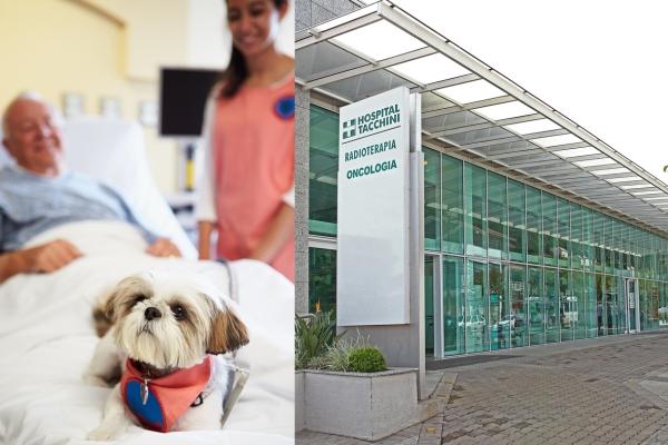 Hospital Tacchini libera entrada de animais de estimação para visitação a pacientes
